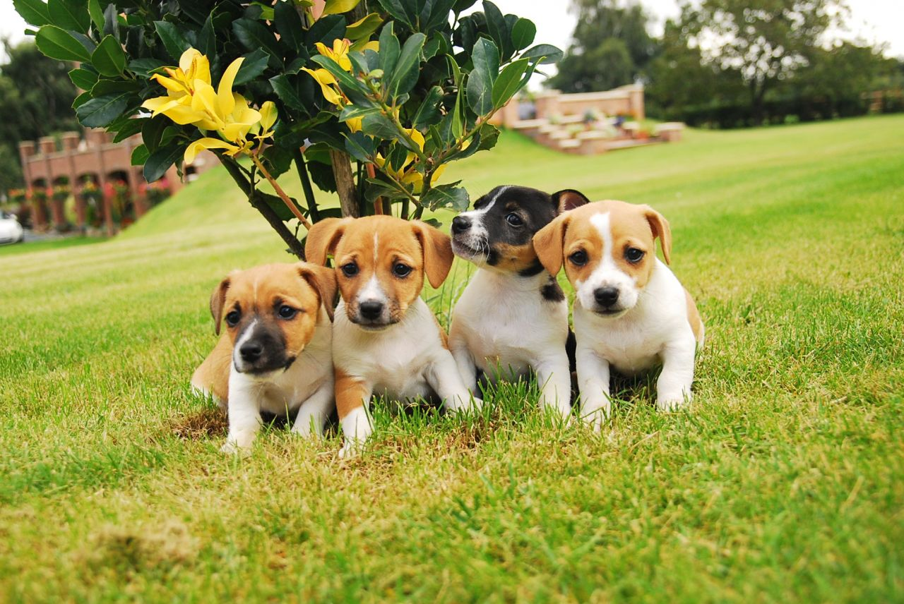 because a picture of Reagan would make me barf, enjoy this litter of puppies